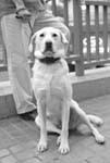 2005106c犬.JPG